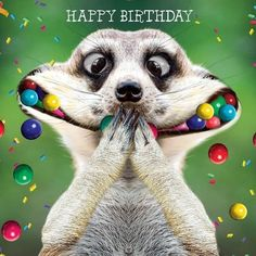 Crazy Silly Happy Birthday Wishes Crazy Silly Happy Birthda.-- Crazy Silly Happy Birthday Wishes Crazy Silly Happy Birthday Wishes Happy Birthday Animals, Happy Birthday Wishes For A Friend, Funny Happy Birthday Wishes, Happy Birthday Pictures, Happy Birthday Greetings, Animal Birthday, Funny Birthday Cards, 21 Birthday, Card Birthday