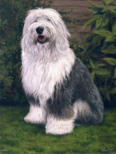 Old English Sheepdog dog portrait oil painting on canvas