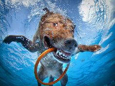 """Dog lover Seth Casteel has made a living photographing man's best friend and has a new book out entitled """"Underwater Dogs"""""""