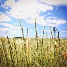 Gras langs het fietspad