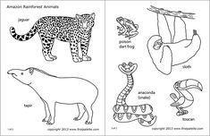 Print out, color and assemble our printable animals into standing paper animals. Choose from our large collection of animal printables that include jungle and rainforest animals, safari animals and polar animals. The Animals, Paper Animals, Jungle Animals, Amazon Rainforest Animals, Rainforest Theme, Brazil Rainforest, Amazon Animals, African Savanna Animals, Printable Animal Masks