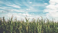 We are on the cusp of developing viable alternatives to pesticides and heavy use of artificial fertilizers. #Happonomy