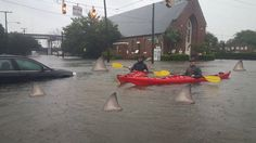 Fins to the Left... #charlestonunderwater