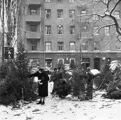 Bergsgatan 17, Christmas tree sales. December 20, 1955 By Jan Ehnemark SVD / Stockholmskällan