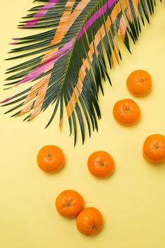 LauraTrevey.com is live! Oranges and Palm Leaves