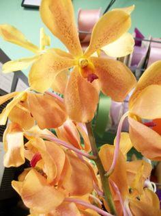 Orange mokara orchids