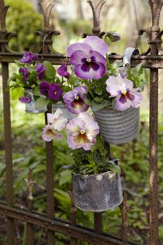 Gartenzauber | Hornveilchen - Gartenzauber Welcome, Garden Gates, Pansies, Vegetables, Heart Gif, Hearts, Beautiful Flowers, Organic Gardening, Wreaths