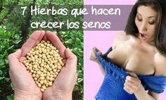 7 hierbas que harán crecer tus senos Home Health, Health Fitness, Beauty Skin, Hair Beauty, Tips Belleza, Natural Home Remedies, Alternative Medicine, Health Remedies, Healthy Tips