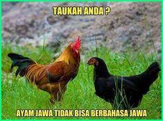 Meme Ayam Paling Gokil Dan Kocak Yang Bikin Ngakak