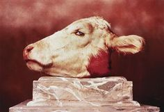 ANDRES SERRANO http://www.widewalls.ch/artist/andres-serrano/ #photography