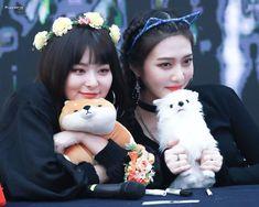 Red Velvet - Seulgi & Joy they both are so cute Red Velvet Joy, Red Velvet Seulgi, Irene, Red Valvet, Ulzzang Korean Girl, Kpop Girls, Girl Group, Flower Girl Dresses, Cute
