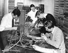 Students examine parts of a tree  MSU