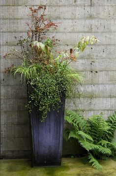 paradis express: Kenneth Philip Landscape Architects. I love the tall container.
