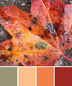 farbinspirationen-natur-laub-rot-orange http://www.farbenergie.com/2015/11/farbinspirationen-aus-der-natur-laub-in-orange-rot/