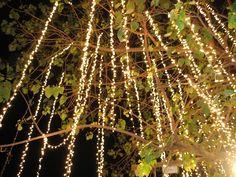 Hanging lights from tree, wedding decoration