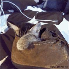 New post on catsdogsgifs