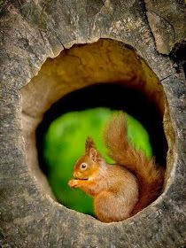 Little sweet squirrel in a Wood hole♡♡♡