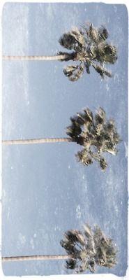 Palms<3