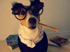 This dog dressed up like Harry Potter..lol https://www.facebook.com/Samthejackrusselterrier