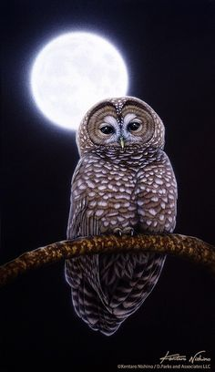 We are not alone (our friends the Owls).