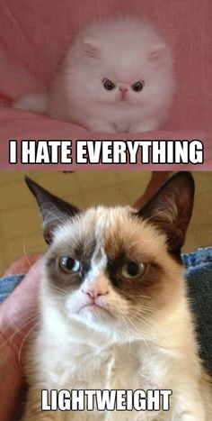 Grumpy!