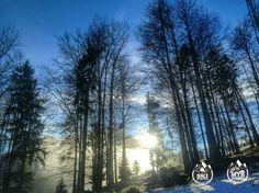 Good morning felow skiers. When visiting Kranjska Gora make sure to contact us for skischool & skirent. 😉 // Dobro jutro kolegi smučarji. Če se mudi te v Kranjski Gori obiščite nas za šolo smučanja in izposojo smuči. 😉 📷: @Robertpokovec  #kranjskagora #kranjska #kranjskasanjska #sanjskakranjska #skischool #skirental #ski #skiservice #winter #topoffer #Slovenija #slovenia #winterjoy #snb #skishop