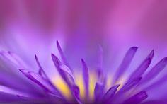 flower desktop nexus wallpaper 2560x1600