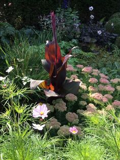 Sedum spectabile, cosmos bipinnatus, Japanse anemoon ( hybride honorine jobert), roodbladige canna.