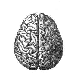 Allen Institute Releases Gene Map of the Human Brain | HealthWorks ...