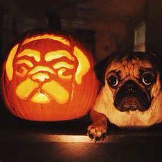 Adorable Pug Pumpkin Carving