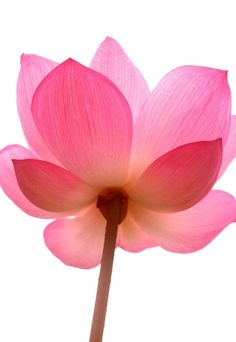 Love this lotus flower it would be cool as a tattoo