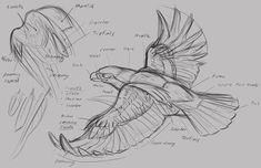 Animal Art and Demos: raptor demo Animal Sketches, Drawing Sketches, Sketching, Bird Drawings, Animal Drawings, Drawing Birds, Eagle Drawing, Poses References, Anatomy Drawing