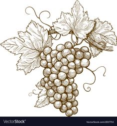 Grapes on the branch vector image on VectorStock Grape Drawing, Vine Drawing, Wood Burning Patterns, Wood Burning Art, Wine Leaves, Vine Tattoos, Branch Vector, Coloring Pages Inspirational, Art Drawings For Kids