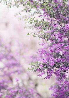 Duranta - grows fast and reaches roof height.  They bloom all spring & summer and hummingbirds & butterflies love them!