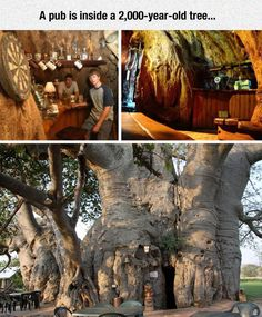 Sunland Baobab In South Africa