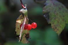 Wild Berries by Eva Lechner on 500px