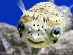 He's so happy he's a puffer fish by FR. BRUCE+