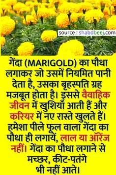 General Knowledge Book, Gernal Knowledge, Good Health Tips, Natural Health Tips, Pretty Handwriting, Lucky Plant, Ayurveda Yoga, Amazing Science Facts, Vegetable Garden Planning