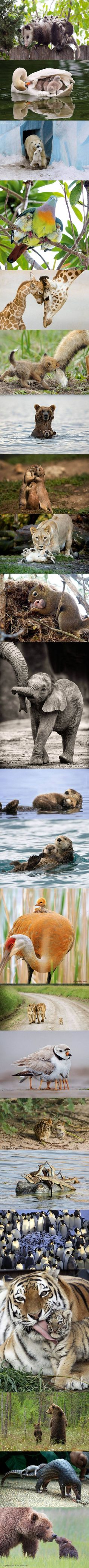 Animal parenthood - Imgur