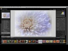 Using Lightroom with Two Monitors « Julieanne Kost's Blog