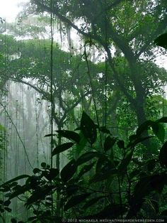 happy to see this image from the Monteverde Cloud Forest in Costa Rica -- I didn't get any shots as great as this while I was there. Tropical Forest, Tropical Garden, Mother Earth, Mother Nature, Monteverde, Nature Plants, Amazon Rainforest, Tree Tops, Plant Leaves