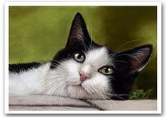 Tuxedo Cat in Garden by art-it-art.deviantart.com on @deviantART...Pastel on cardboard DIN A4 8x12 inches