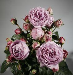 Radient 50 Rosenblätter Blätter Für Gestecke Anstecker Seidenblumen Hochzeit Deko Hochzeitsdekoration Blumen, Blüten & Girlanden