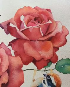 Watercolor Tutorial | Step By Step How To Paint A Rose Watercolor Paintings For Beginners, Watercolor Art Lessons, Watercolor Artists, Watercolor Rose, Watercolor Illustration, Watercolor Flowers Tutorial, Watercolour Tutorials, Botanical Drawings, Rose Art