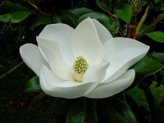Imágenes de Flores Bonitas - Vol.13 (22 Fotos)