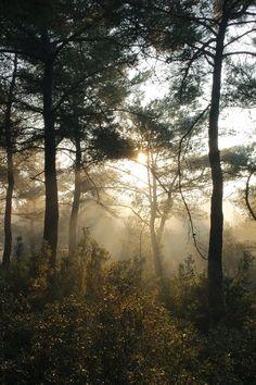 Kostenloses Stock Foto zu natur, wald, bäume, sonnenstrahlen