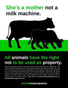 Elle est une mère, pas une machine à lait. Les animaux ne sont pas notre propriété.  http://dechairetdelait.wordpress.com/2013/05/26/bonne-fete-des-meres/#more-1294