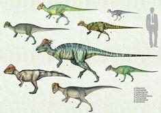 Pachycephalosauridae+1+by+cisiopurple.deviantart.com+on+@DeviantArt