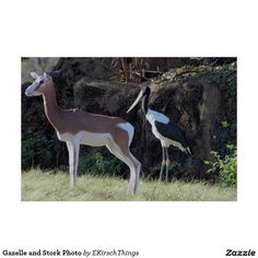 Gazelle and Stork Photo Poster