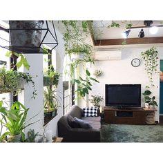 kiki_nekkoさんの、Overview,植物,中古住宅,いなざうるす屋さん,NO GREEN NO LIFE,漆喰DIY,関西好きやねん会,グリーンのある暮らし,植物のある暮らし,ZOO会♡についての部屋写真